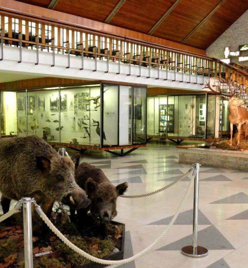 Múzeum TANAPu 600m